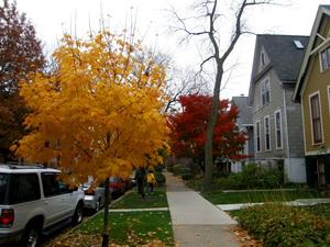Осень в Чикаго